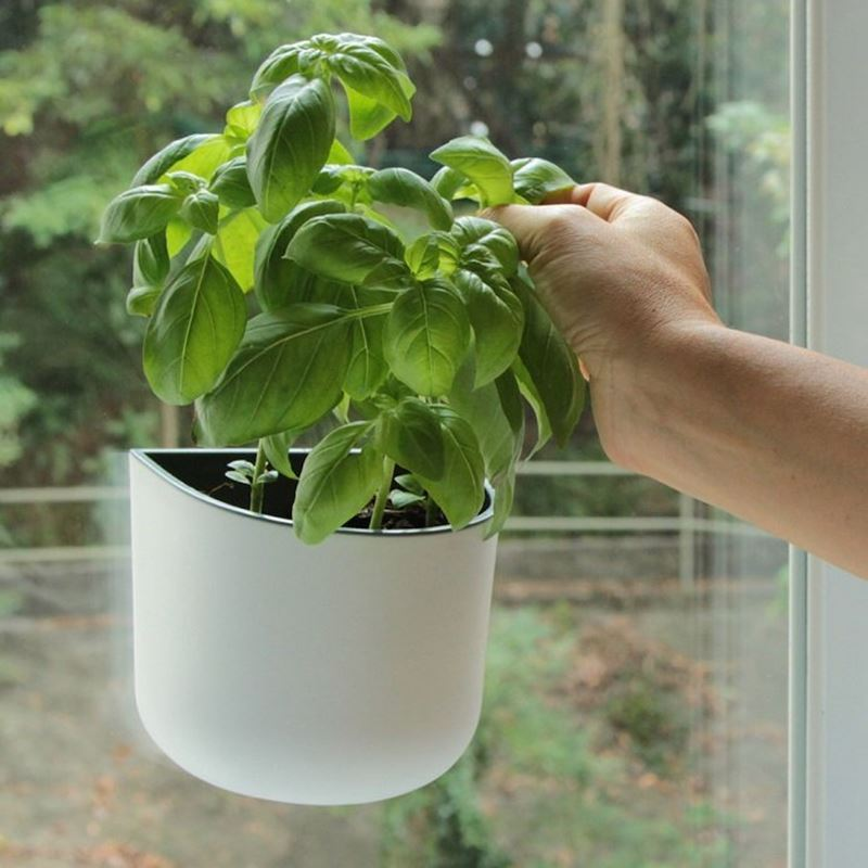 Okidome – Eden Suction Wall Planter