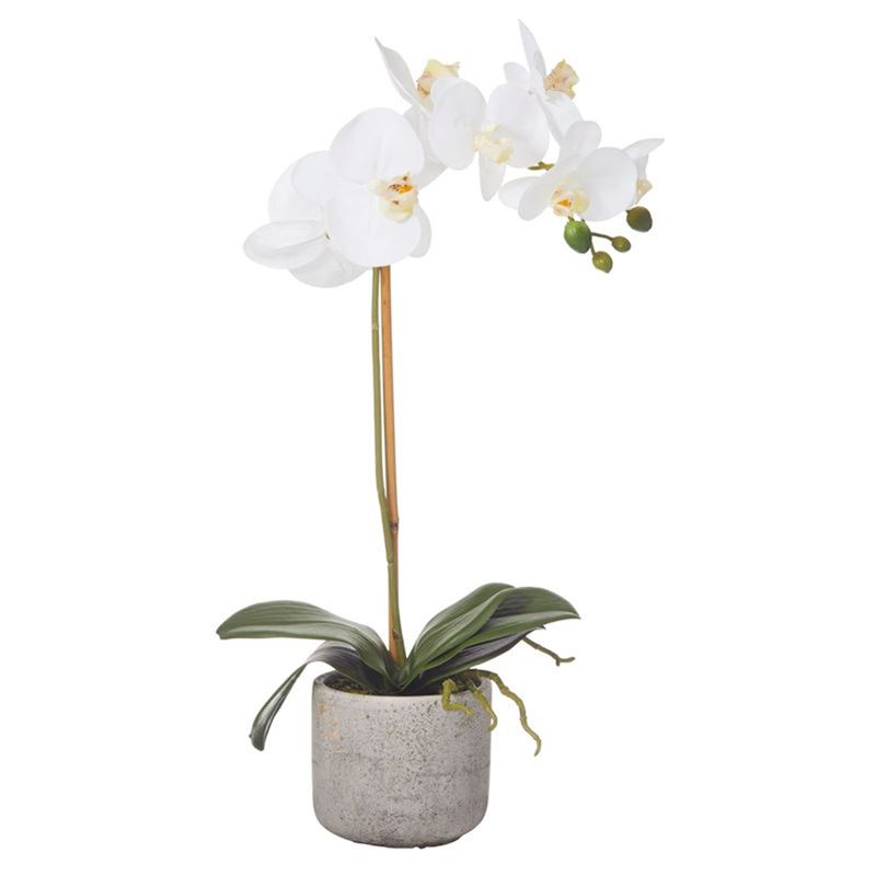 Rogue – Butterfly Orchid in Retro Pot White/Charcoal 12x24x48cm