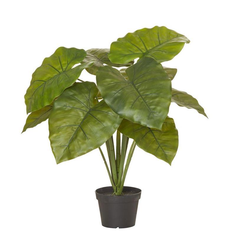 Rogue – Alocasia Plant in Garden Pot 60x60x75cm Green