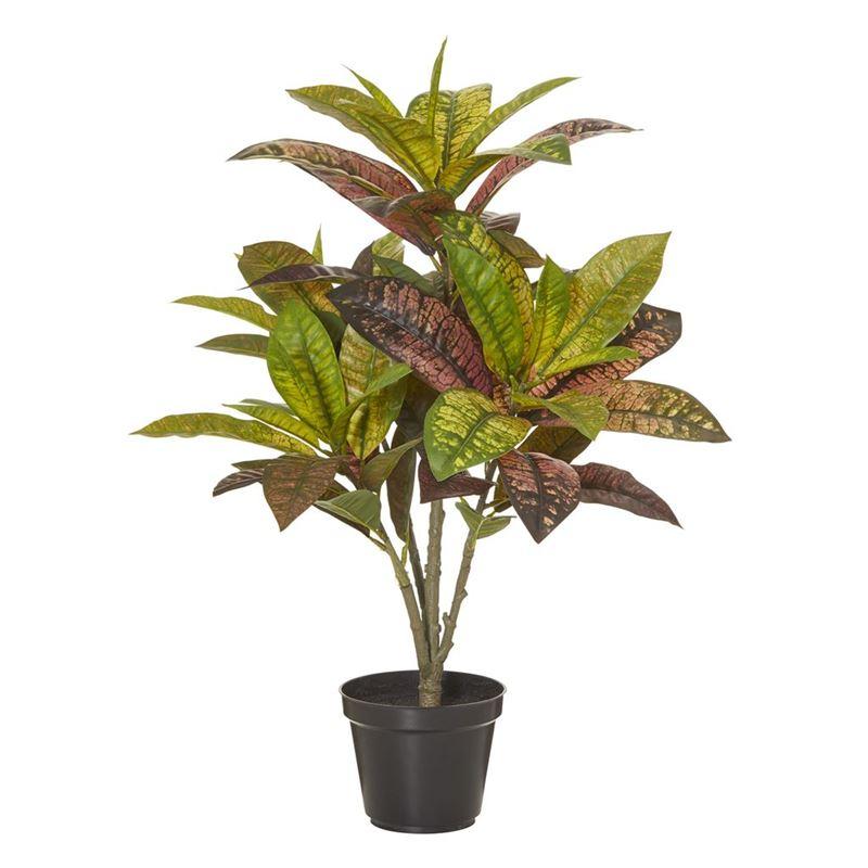 Rogue – Croton Plant in Garden Pot 42x42x60cm Green/Burgundy