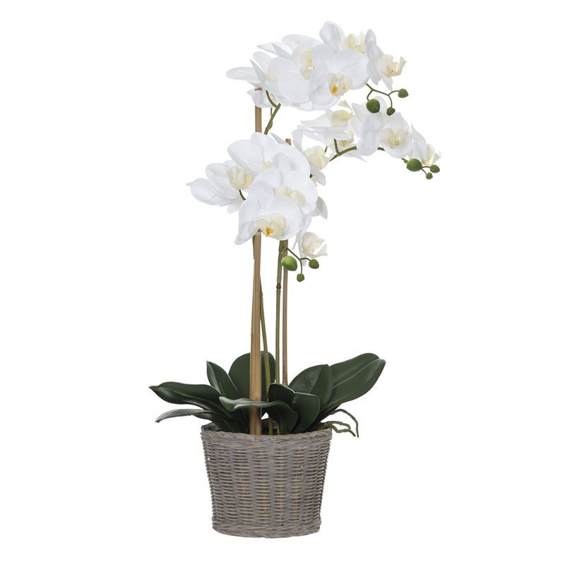 Rogue – Butterfly Orchid in Basket Pot 38x26x60cm White
