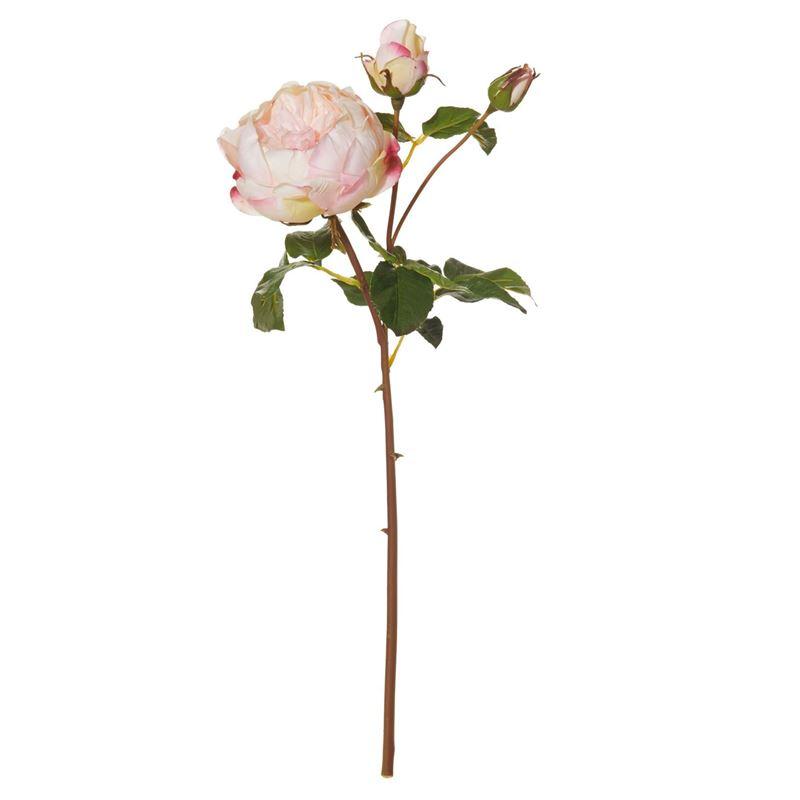 Rogue – English Rose Spray Dark Pink 20x18x56cm
