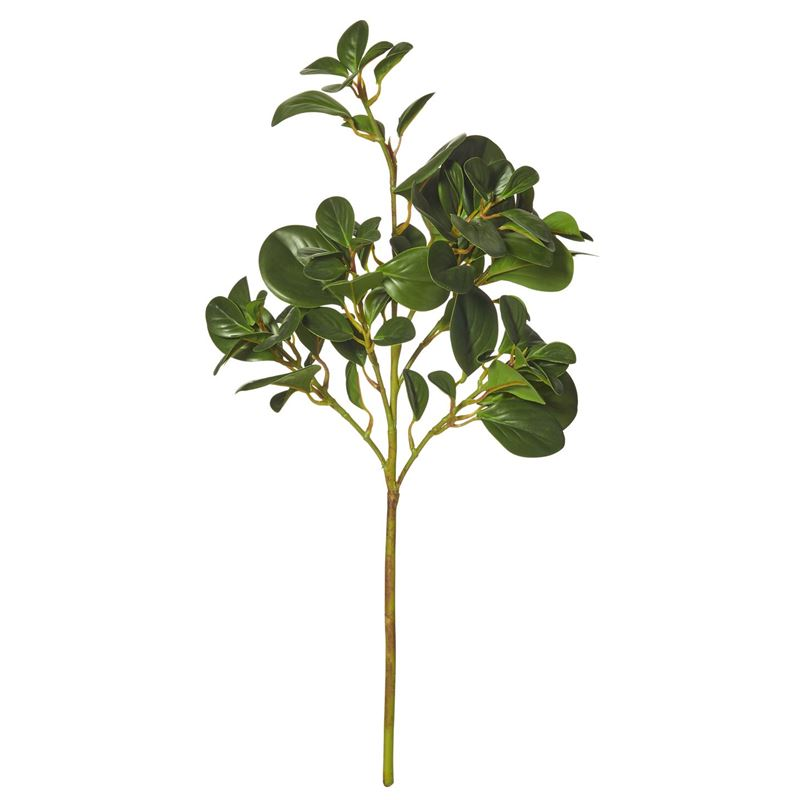 Rogue –  Peperomia Stem 30x30x65cm Green