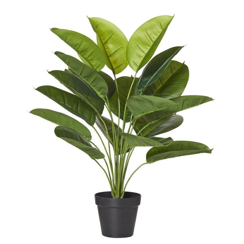 Rogue – Evergreen Plant 45x45x58cm
