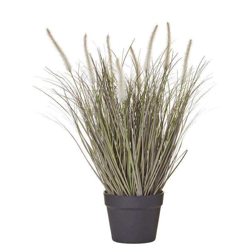 Rogue – Fountain Grass in Garden Pot 43x43x57cm Green